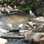 Paine's Creek, Stoney Brook Cape Cod
