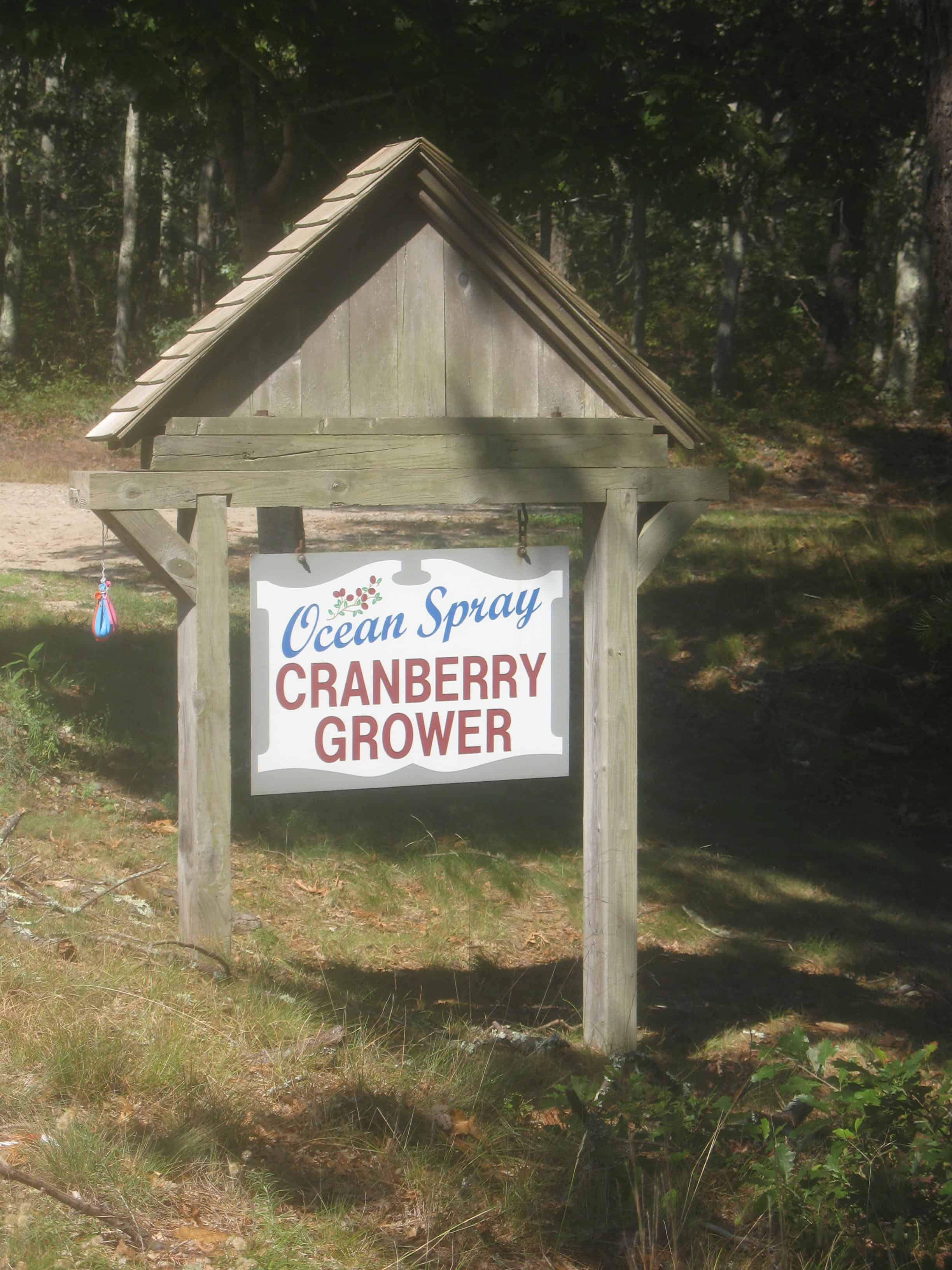 Cranberry Farming, Harwich
