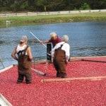 Cape Cod Cranberry Festival