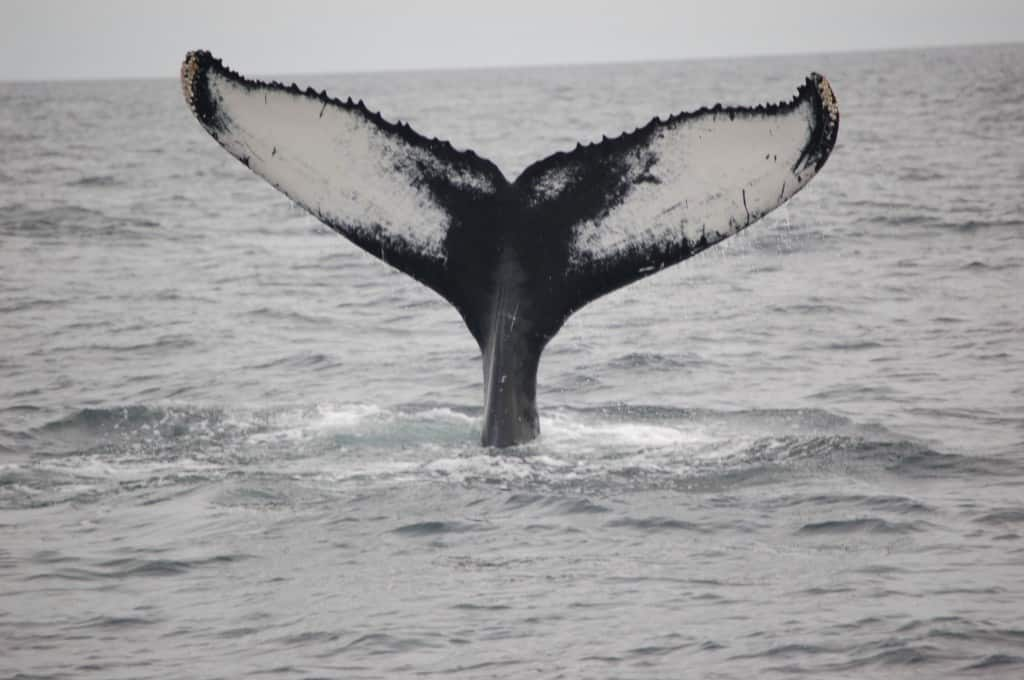 Cape Cod Whale-Watching