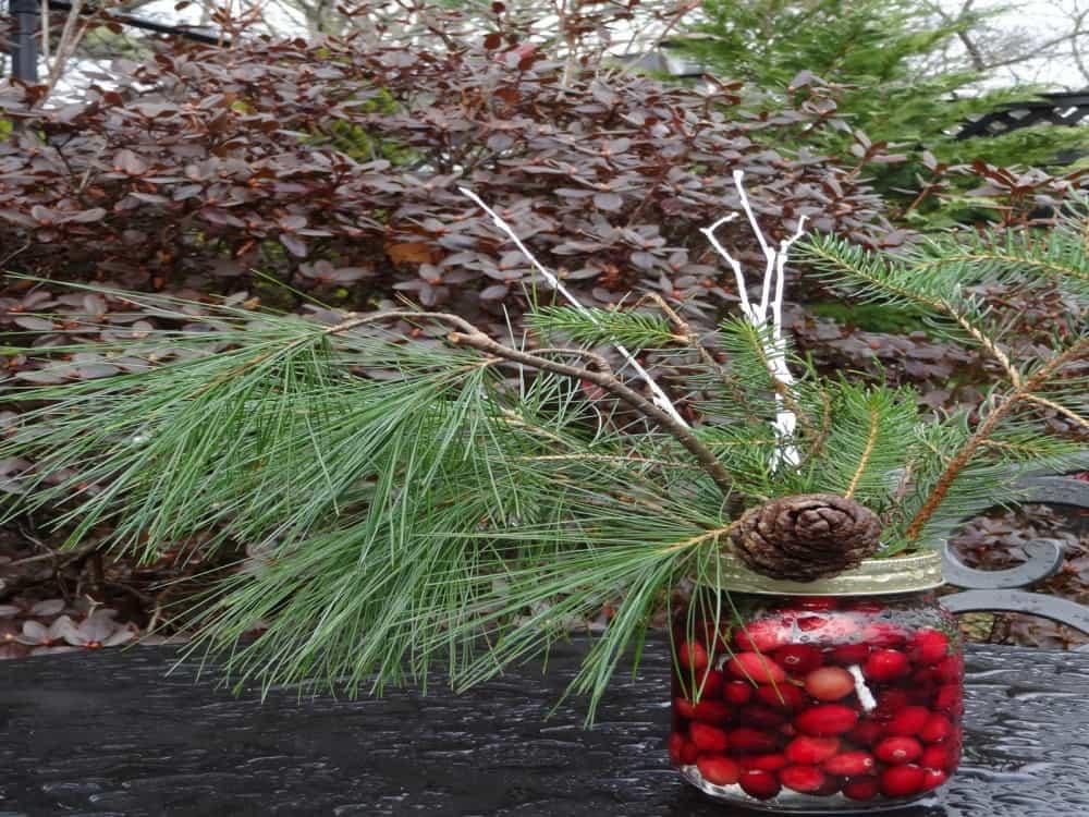 Christmas Cape Cod Cranberries