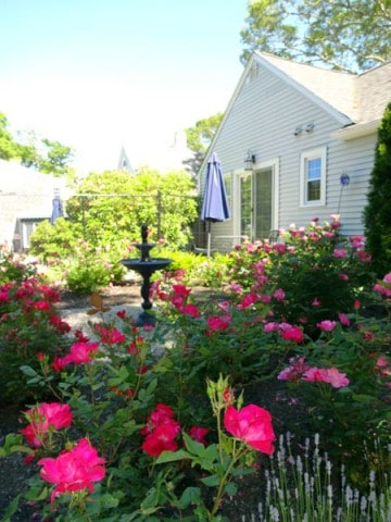 Spring on Cape Cod