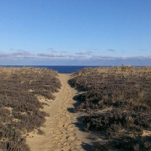 Cape Cod Hiking Trails