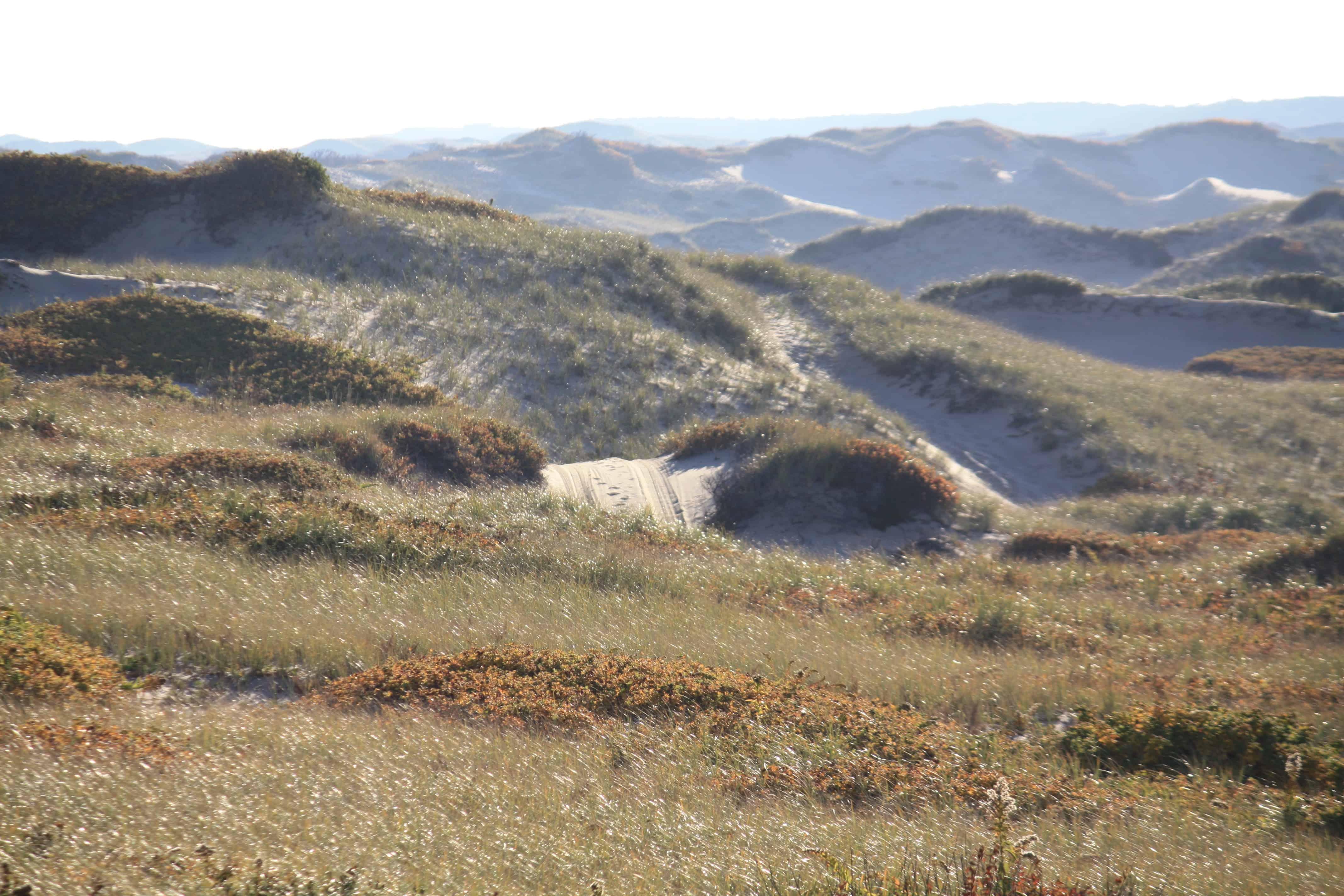 Dune Shacks Cape Cod Part - 20: Dune Shacks