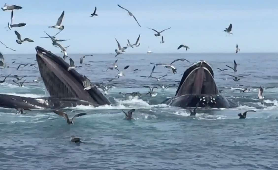 Cape Cod Whale Watching | Let the Good Times Splash! - The
