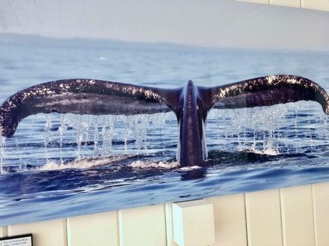 Cape Cod Art