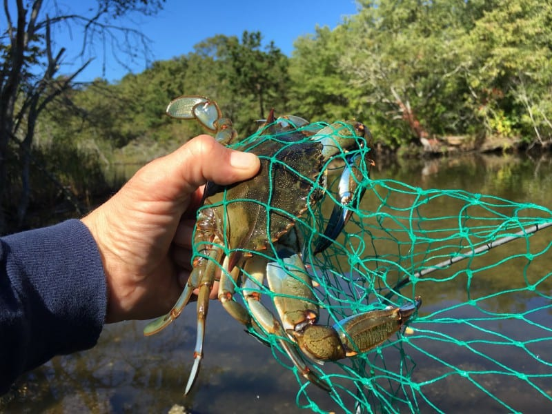 Blue Crabbing on Cape Cod